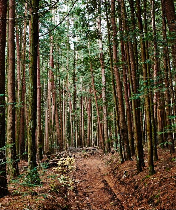針葉樹林。 カラマツ、アカマツなどが植林された林。