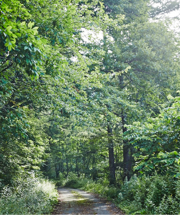 広葉樹林、いわゆる「雑木林」と呼ばれる、ナラ、クヌギなどの林。